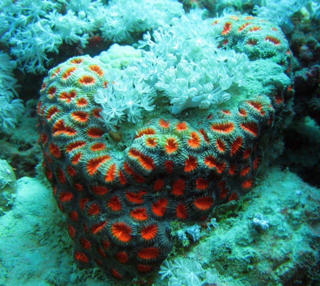 Sharm El Naga koralai